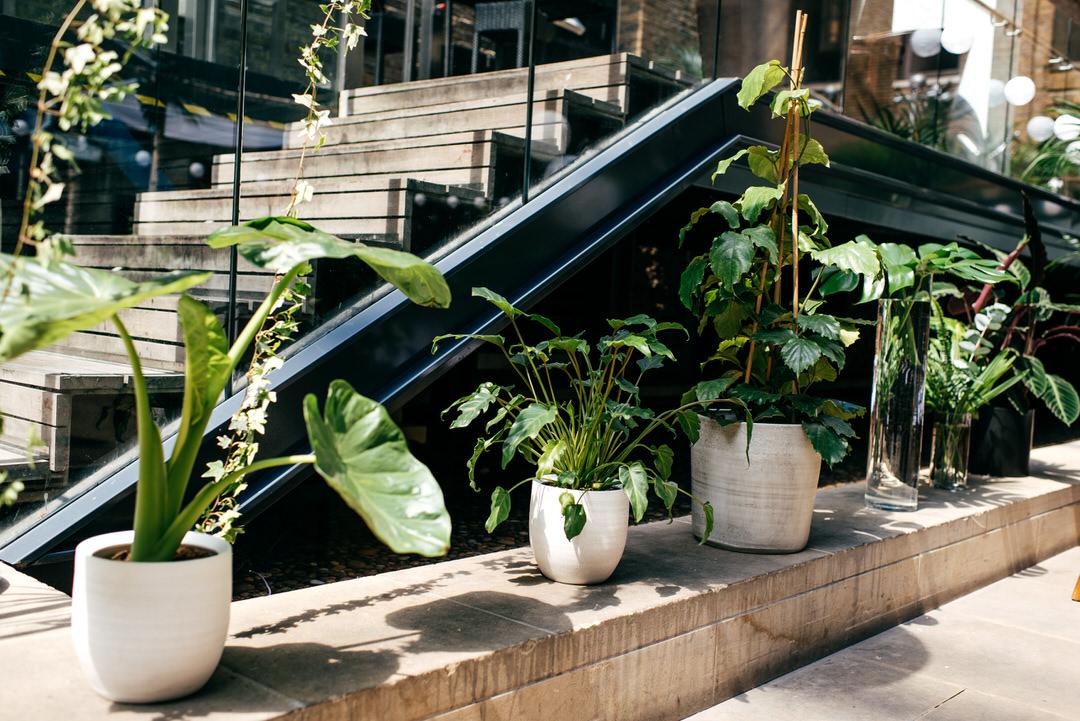 wilma-event-styling-green-pot-plants-trendy-wedding-london